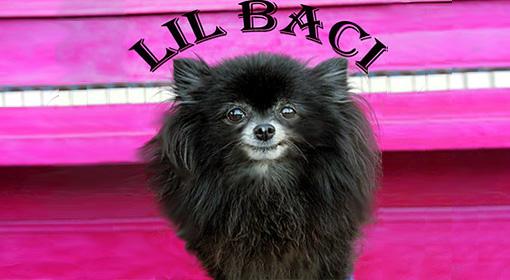 Lil Baci - Pomeranian Bacinaturals
