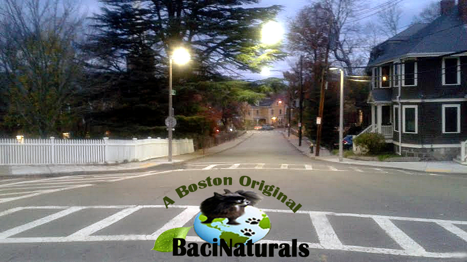 bacinaturals natural dog products
